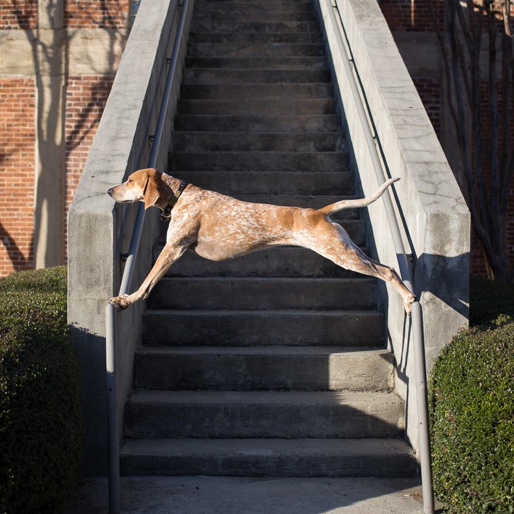 Maddie-Stairs.jpg