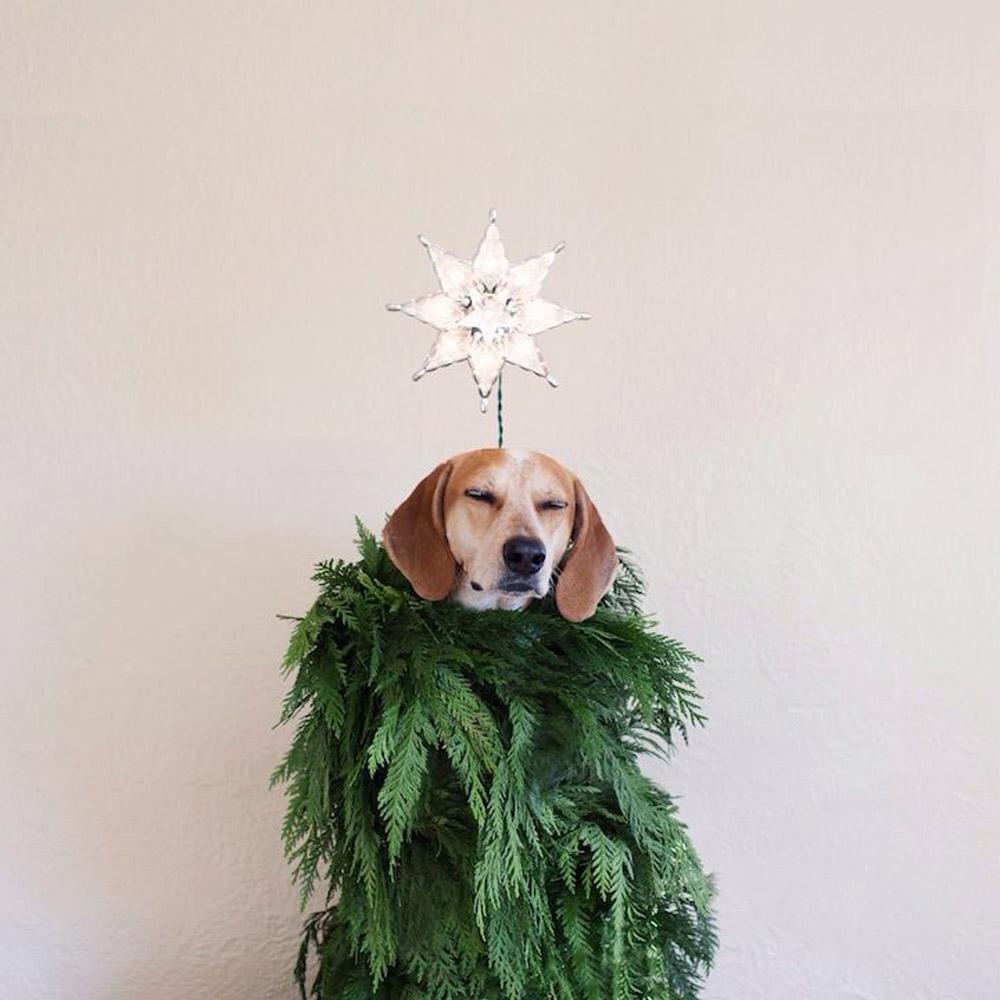 Festive Maddie by  Theron Humphrey