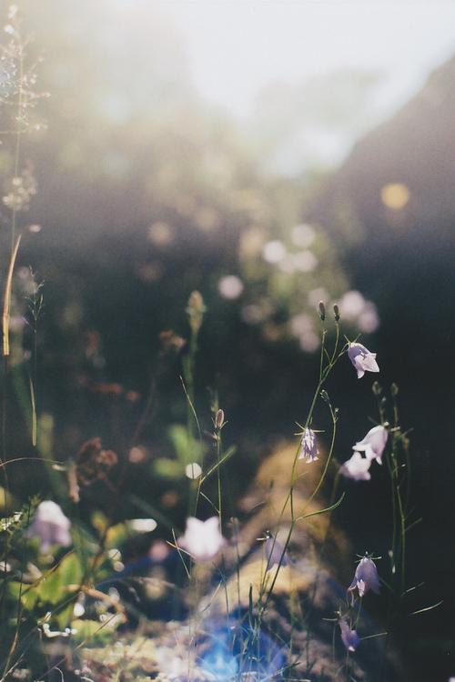 Spring-Light.jpg