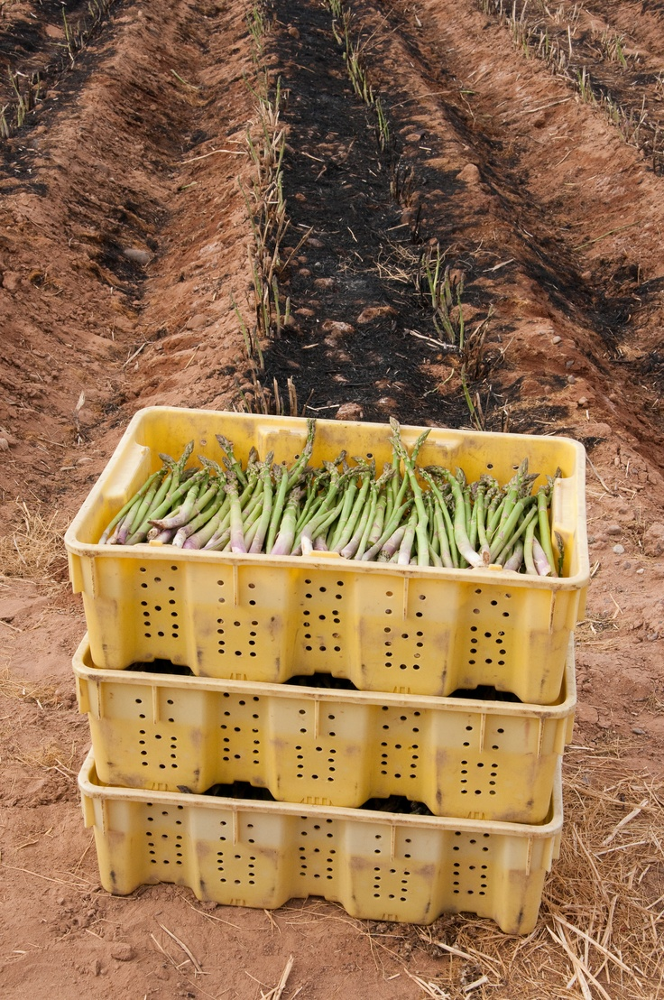 Spring-Asparagus.jpg