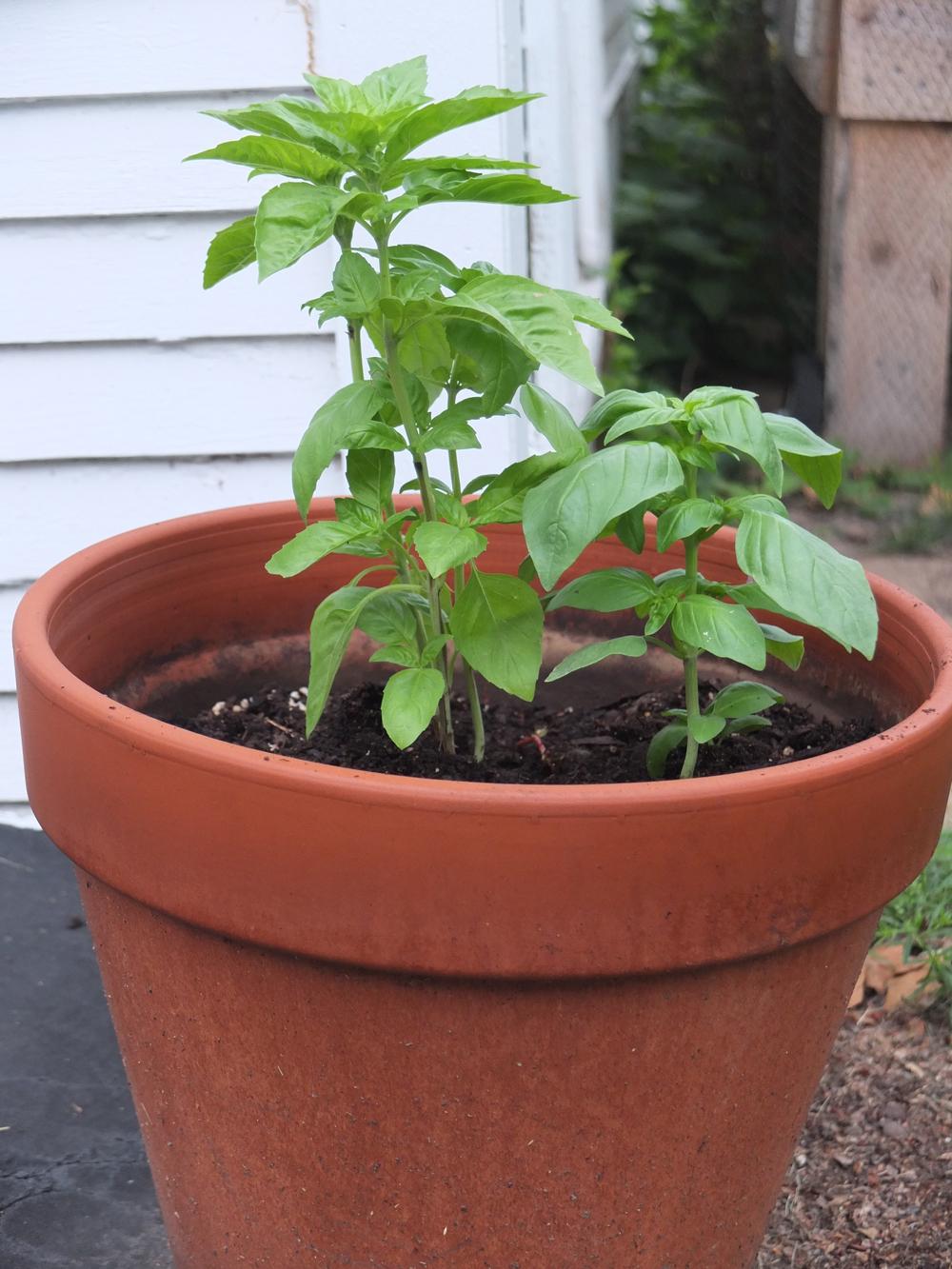 ready-to-grow-3.jpg