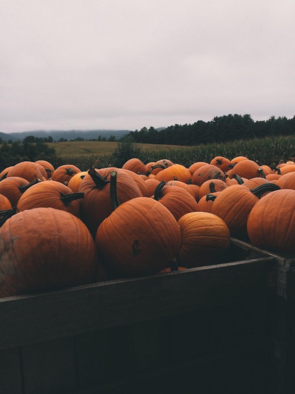 pumpkins preferably self picked pumpkins are a must - via  tumblr