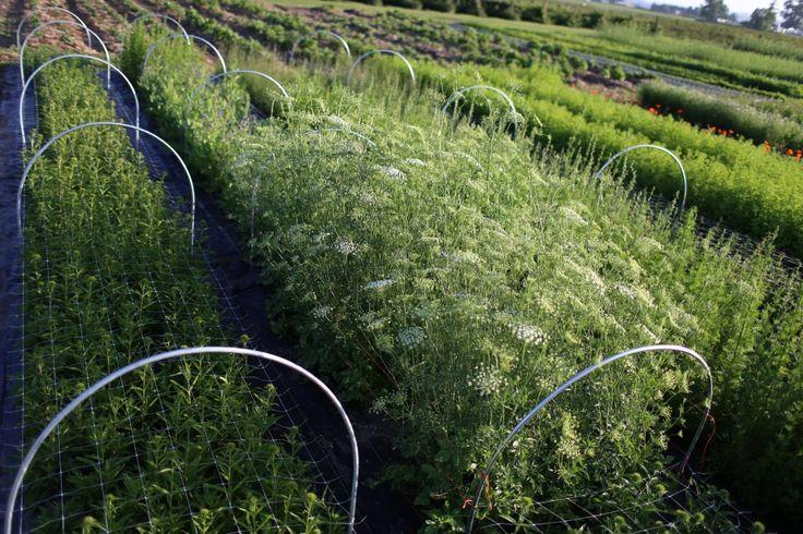 garden-pinners-floret-farm-3.jpg