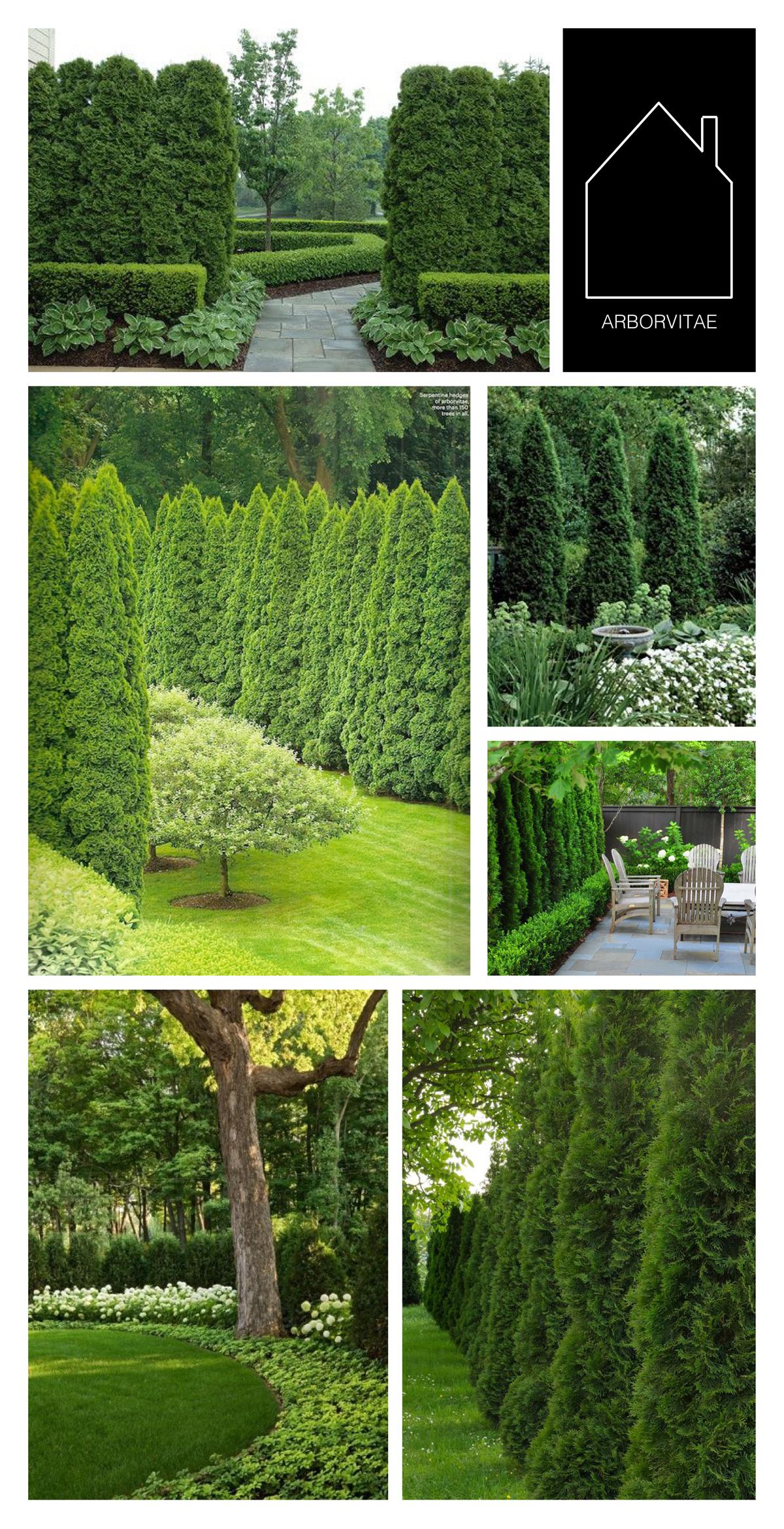from top left - design by  Land Architects  via  Houzz  - via  Quintessence  - design by Zachary Duff via  Atlanta Homes & Lifestyles - design by  Falkner Gardens  - via  Bungalow Blue Interiors  - via  The Tree Center  | THE PLACE HOME
