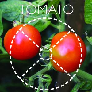 vegetable planter: part 2 | 5.14.2013