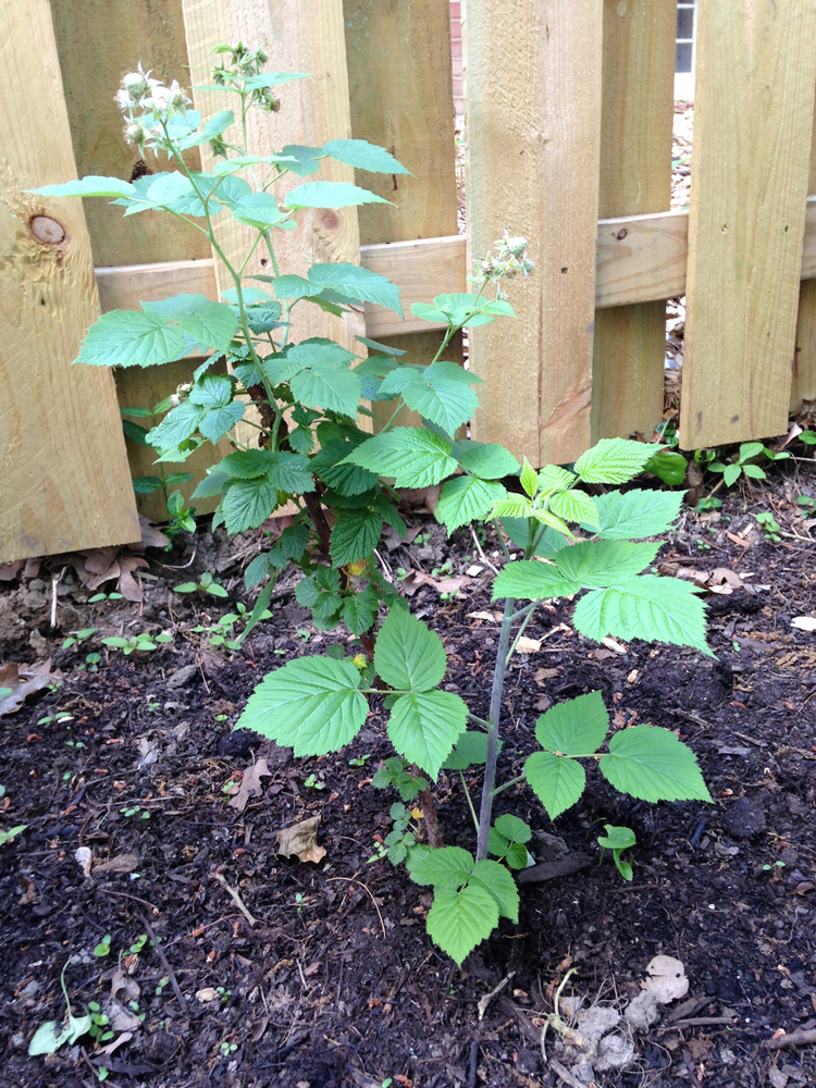 end of may garden report | 5.27.2015