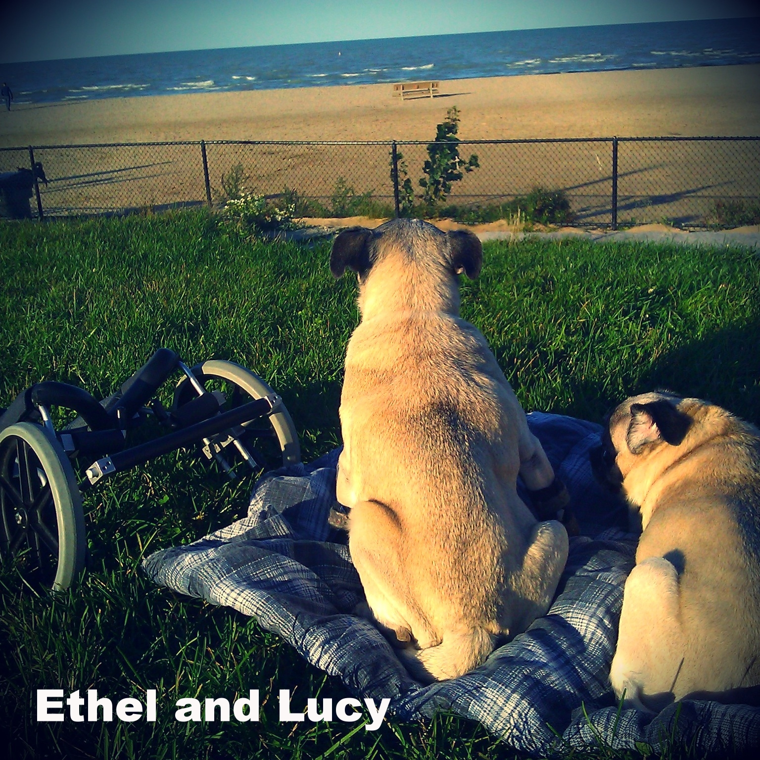 Ethel and Lucy