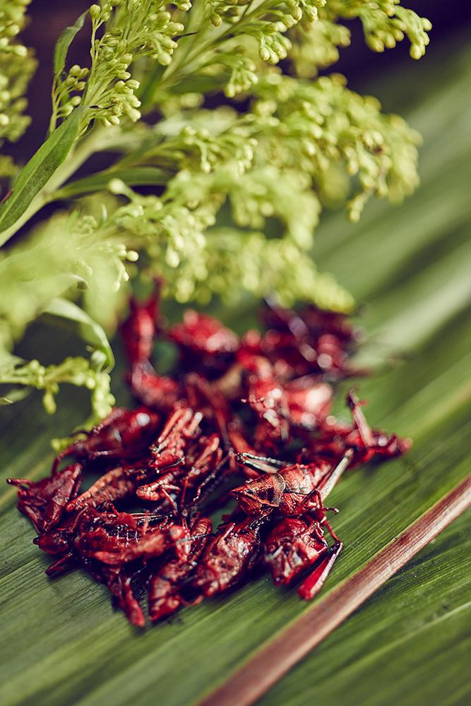Copenhagen_Food_The_Urban_Huntsman_Mx_6.jpg