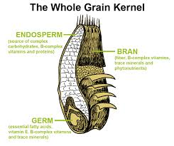 You see all that beautiful bran and that impressive, golden germ? All that is removed when the grain is refined! Sad face.
