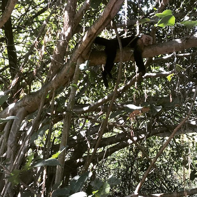 Just chillin in paradise. #manzumagic #indulge #villamanzucr #peninsulapapagayo #monkey