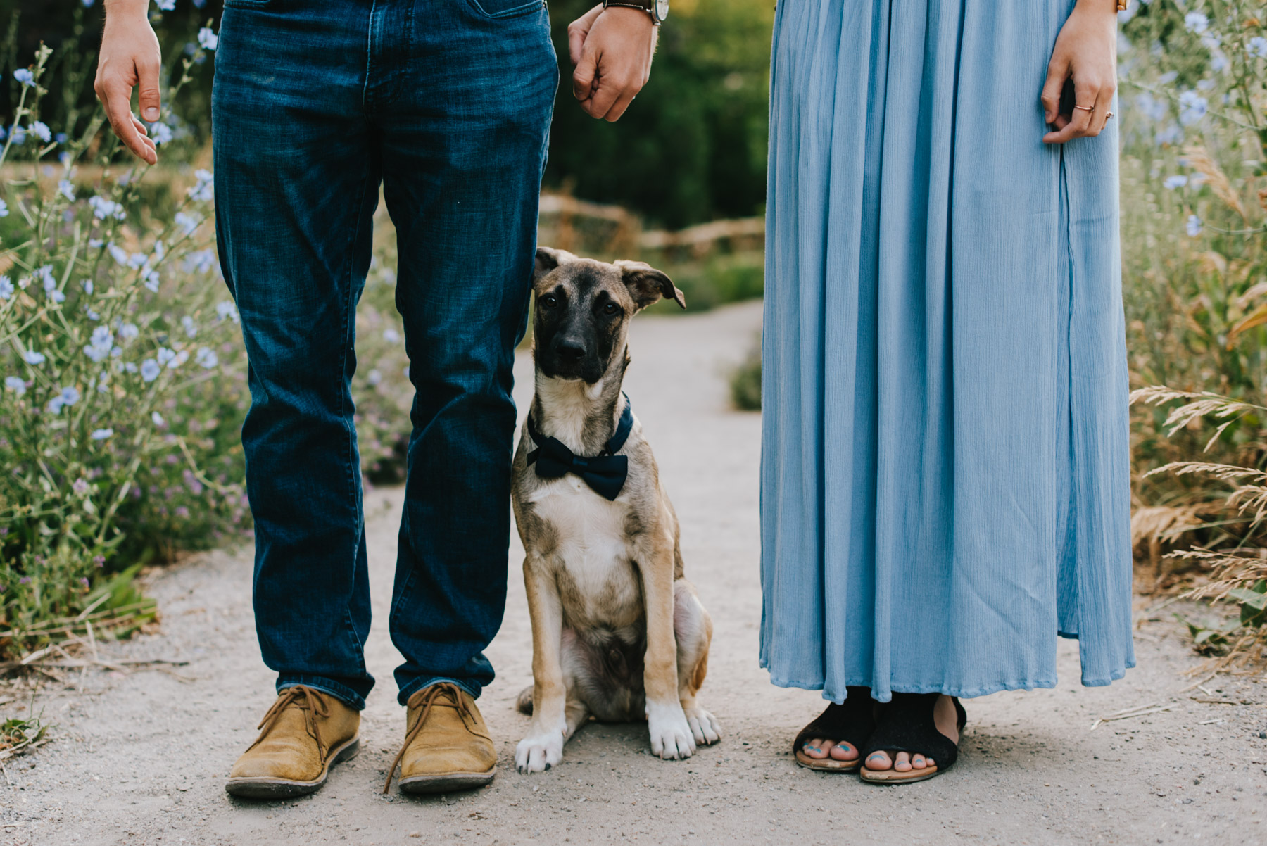 This engagement session was done at Mount Sanitas over the summer, and this adorable puppy stole the show! Betsy and Connor were up for a hiking engagement session, as long as their puppy Teddy could be involved, and I was all about it, cause like hello twist my arm, look at this cutie! And wearing a bowtie! I can't with the cuteness!