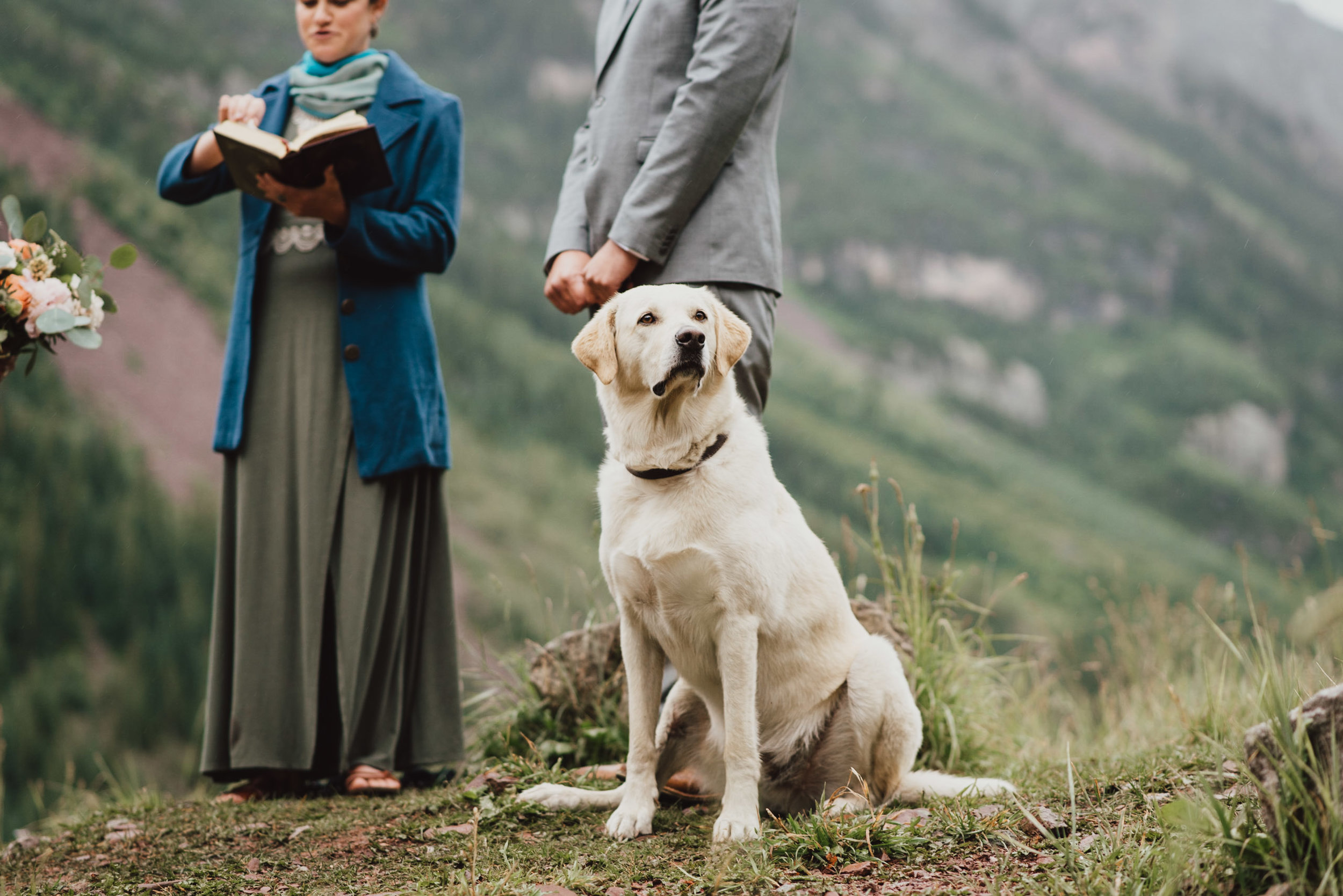 Heather and Darren's ring bearer, their yellow lab.
