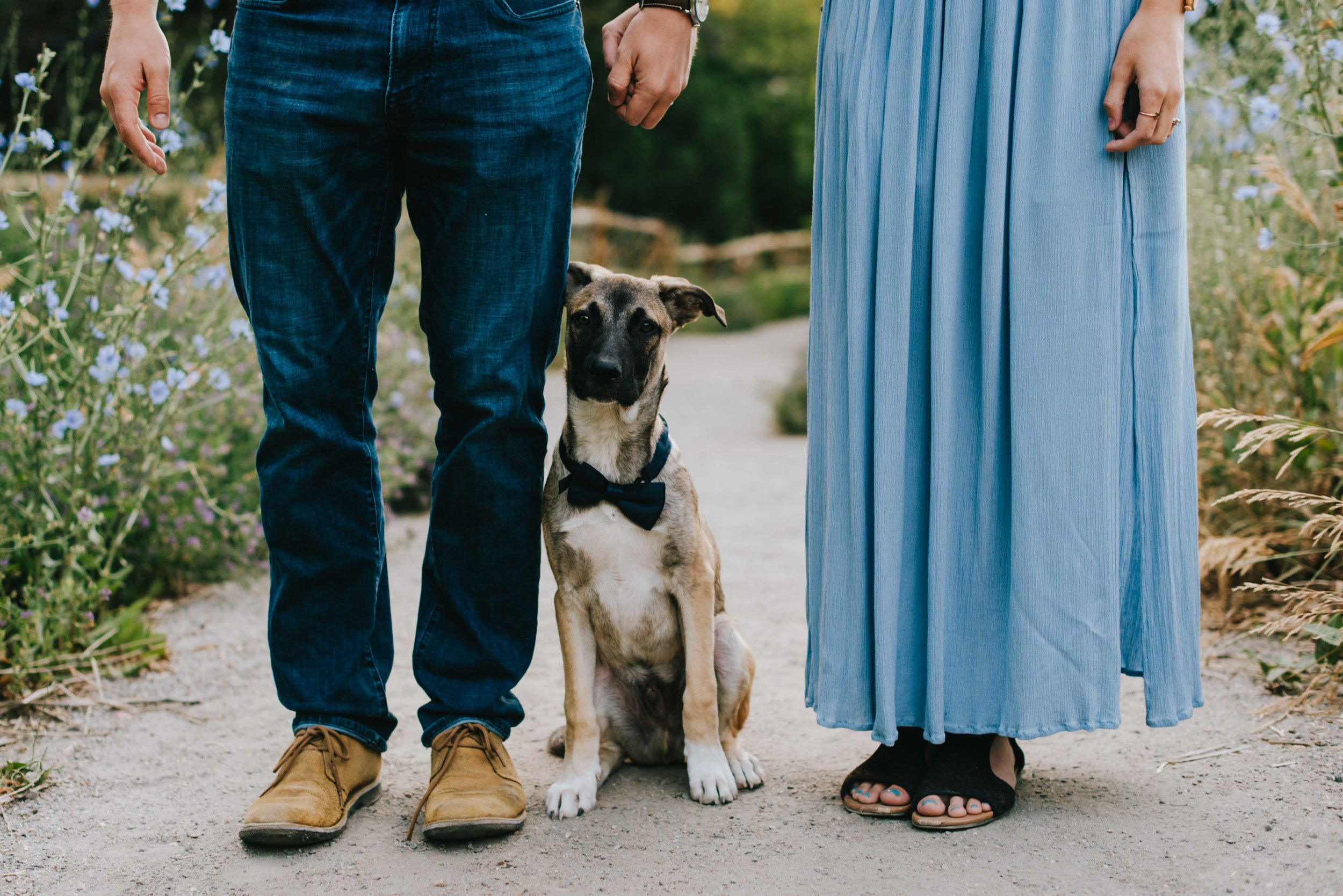 Betsy, Connor and their adorable puppy Teddy during their Mount Sanitas engagement session!