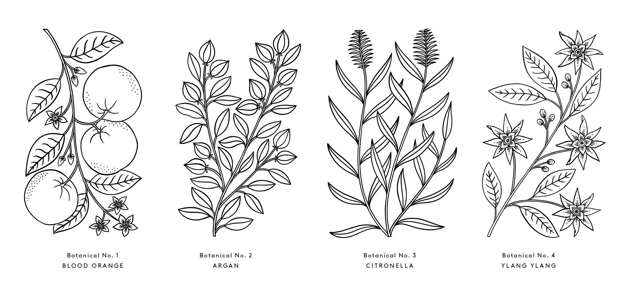kimball_botanicals.jpg