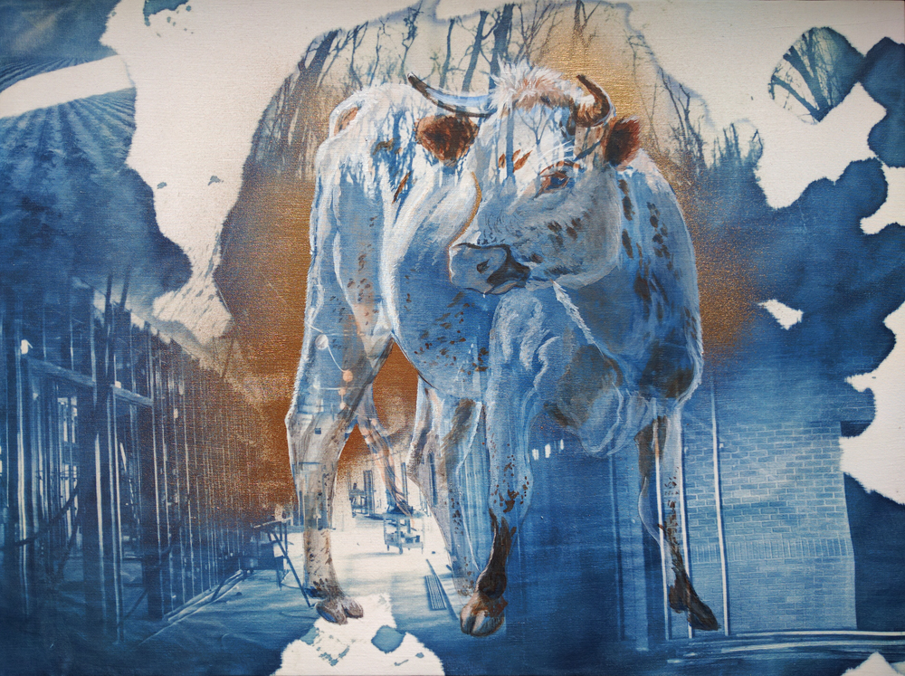 Florida Cracker Cow,  2016, Cyanotype, Acrylic, and Spraypaint. 18x24""