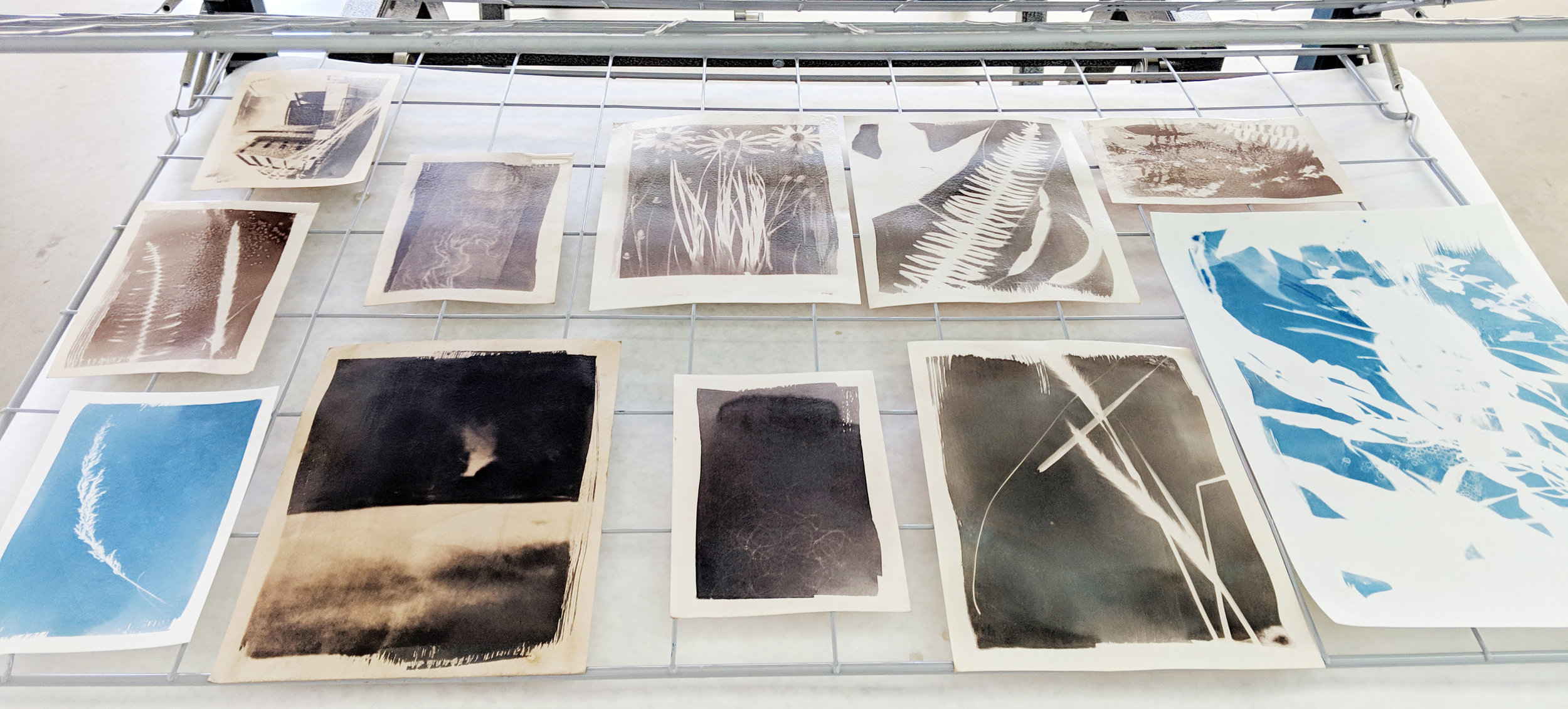 Student work drying after being developed and washed. Examples are plain (blue) and toned in tea or wine tannins.