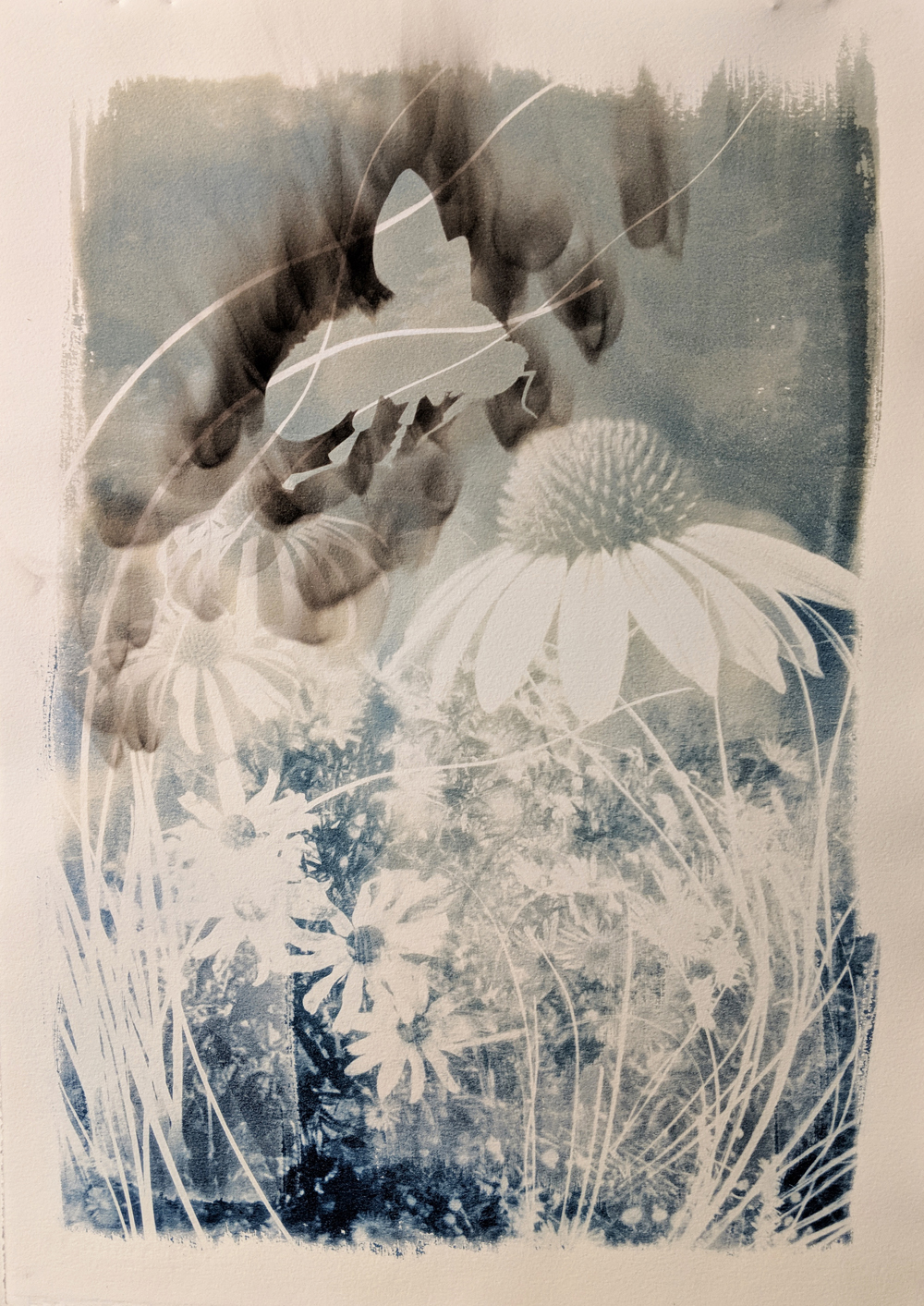 """- Rusty Patched Bumble Bee2019Cyanotype and candle soot, 15x22""""$190"""