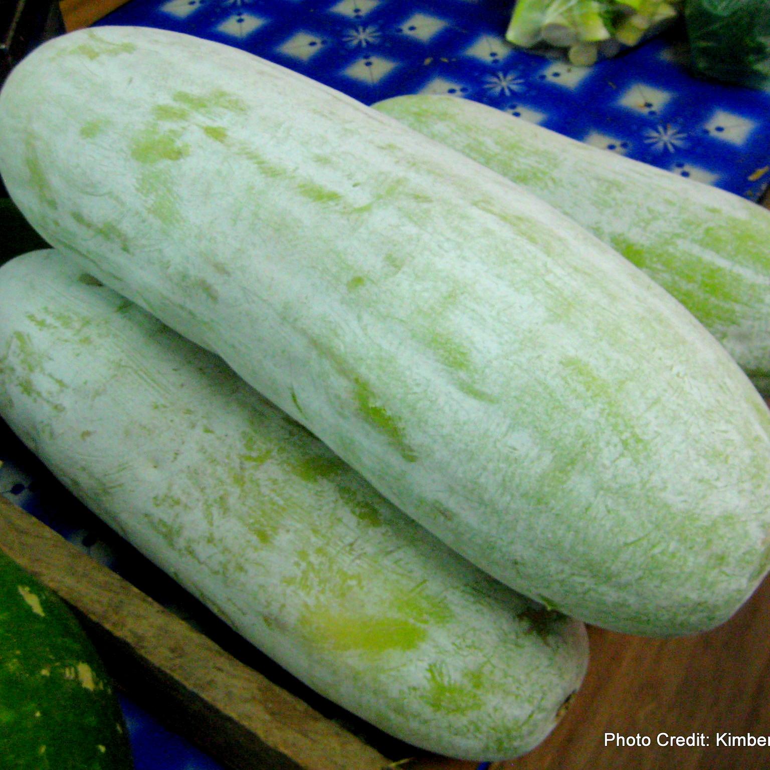 Wax  gourd , Benincasa  hispida