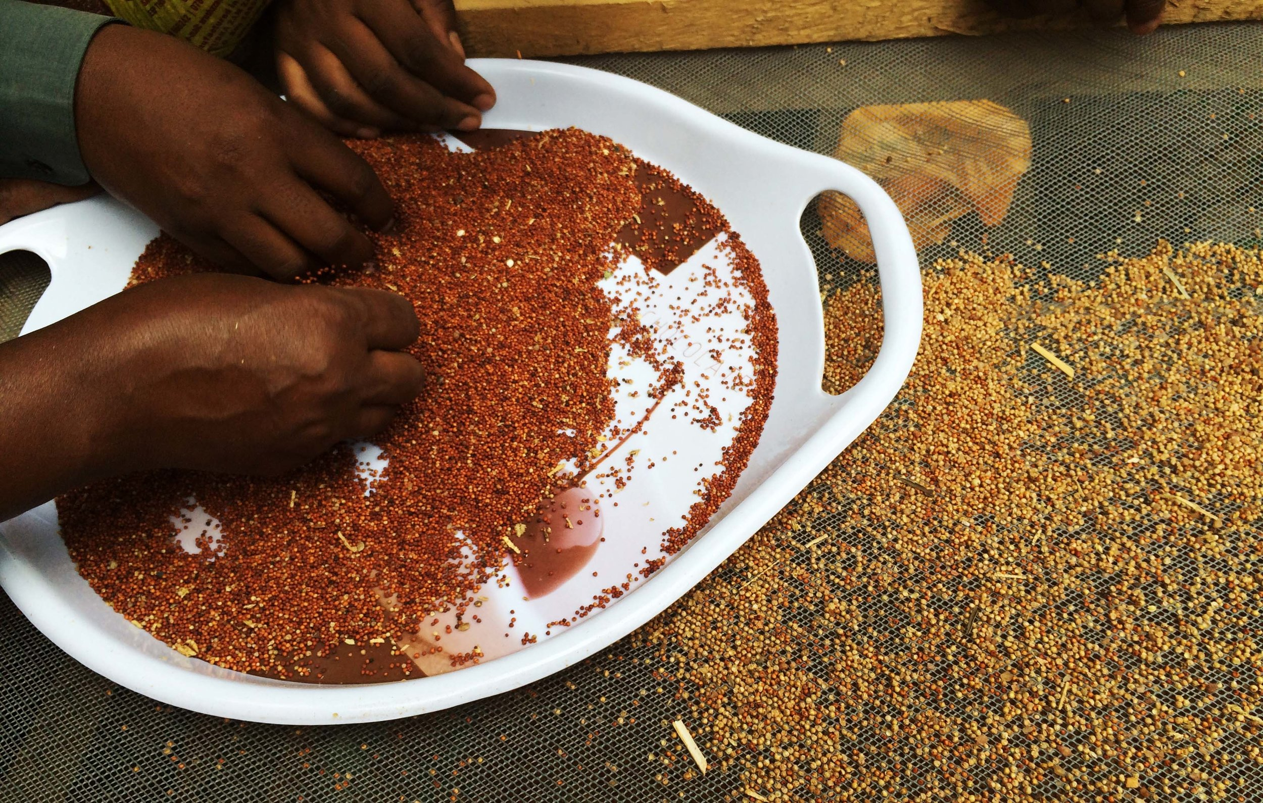 Seed saving: A practical overview for small-scale seed banking