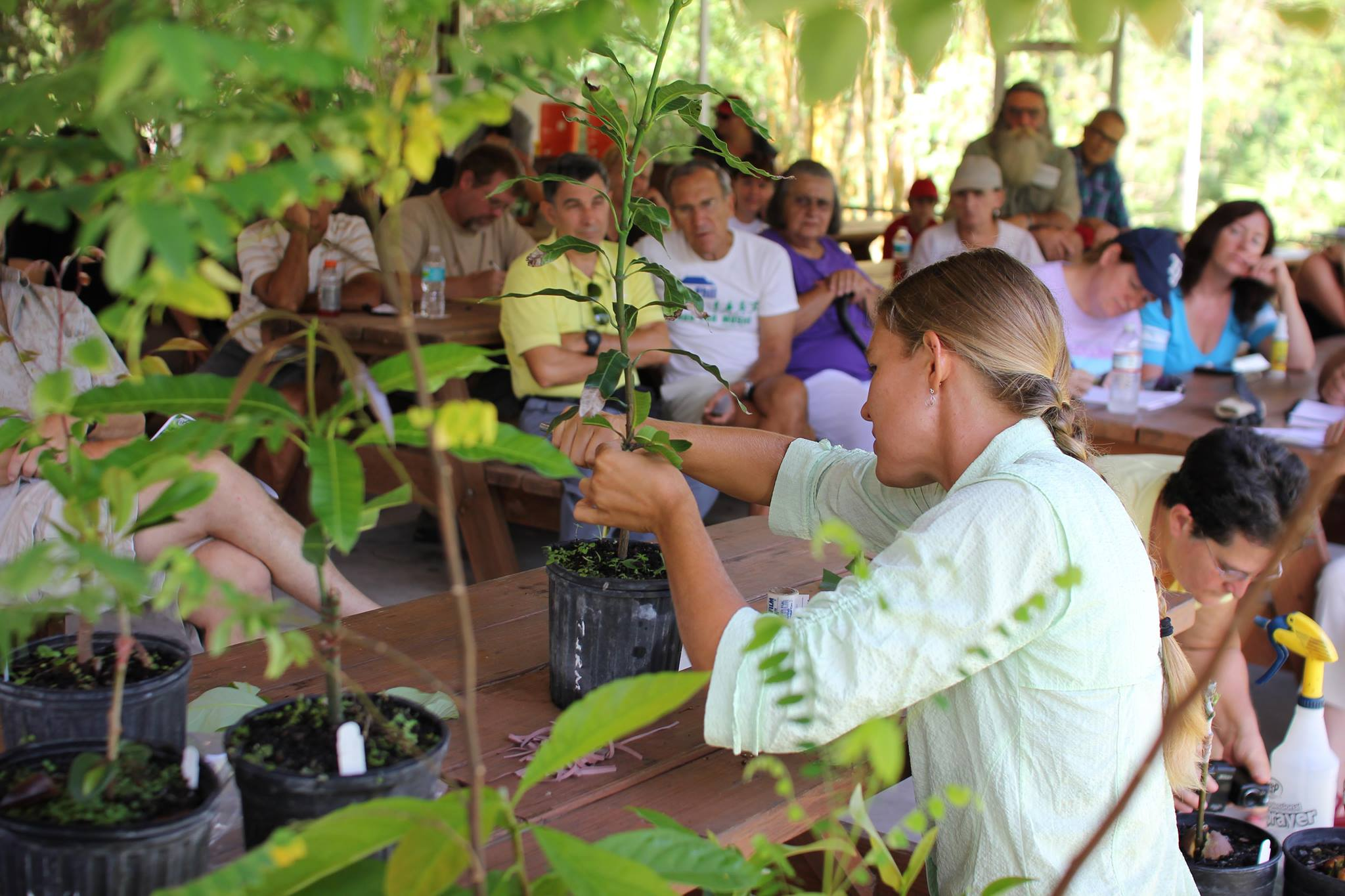 Marcie Dallmann demonstrates grafting methods for producing healthy tropical fruit trees. ECHO seminars benefit thousands per year with sustainable agriculture techniques.