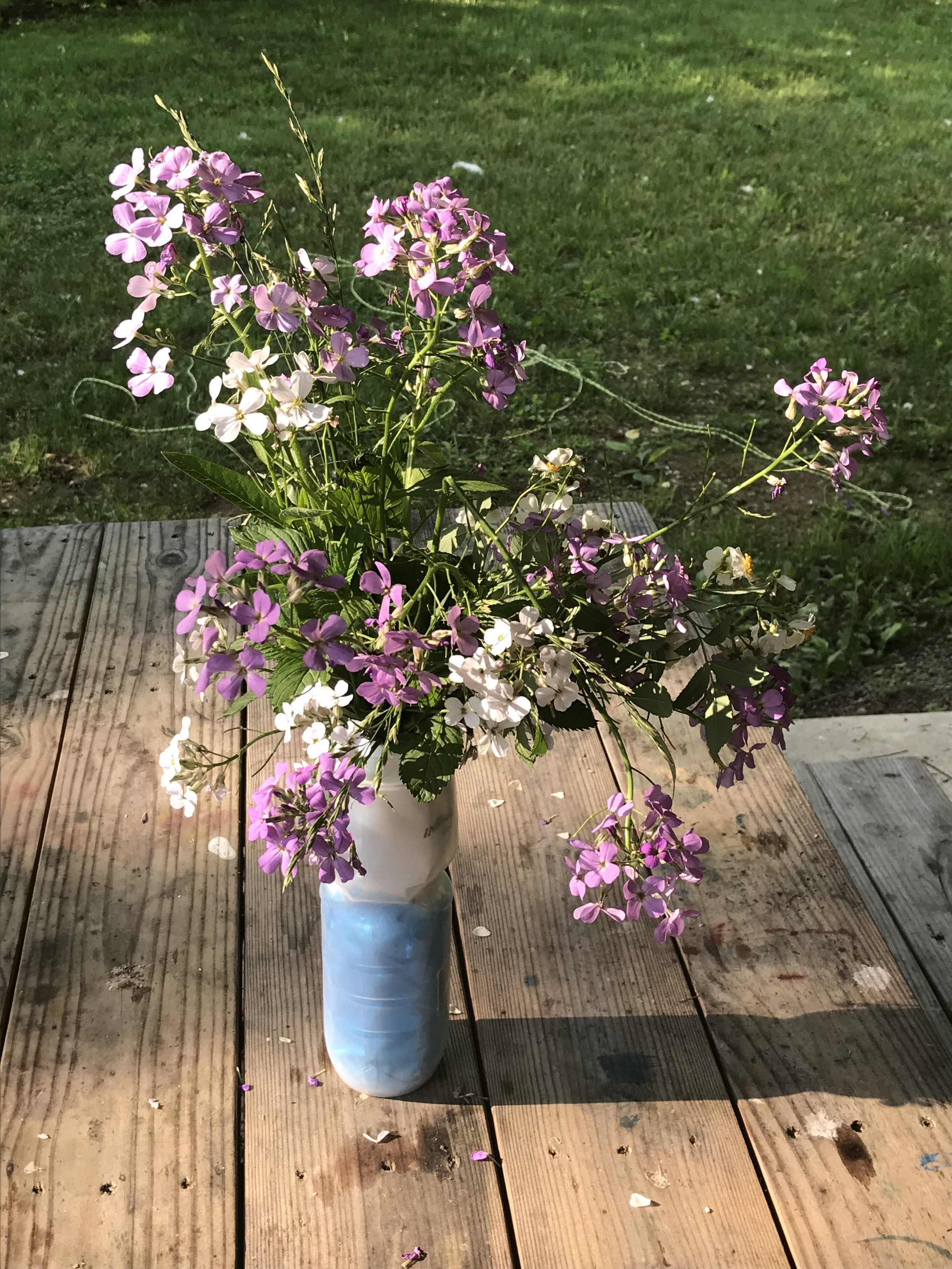 Look at the flowers that Avery picked at a campground. We enjoyed them at our dinner table that evening.
