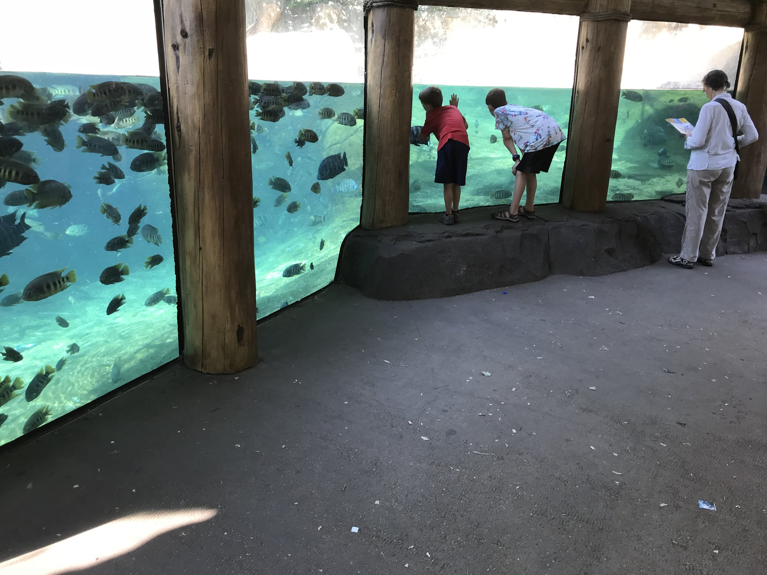 St. Louis Zoo (FREE, by the way!)- a whole different world is under water. So cool!