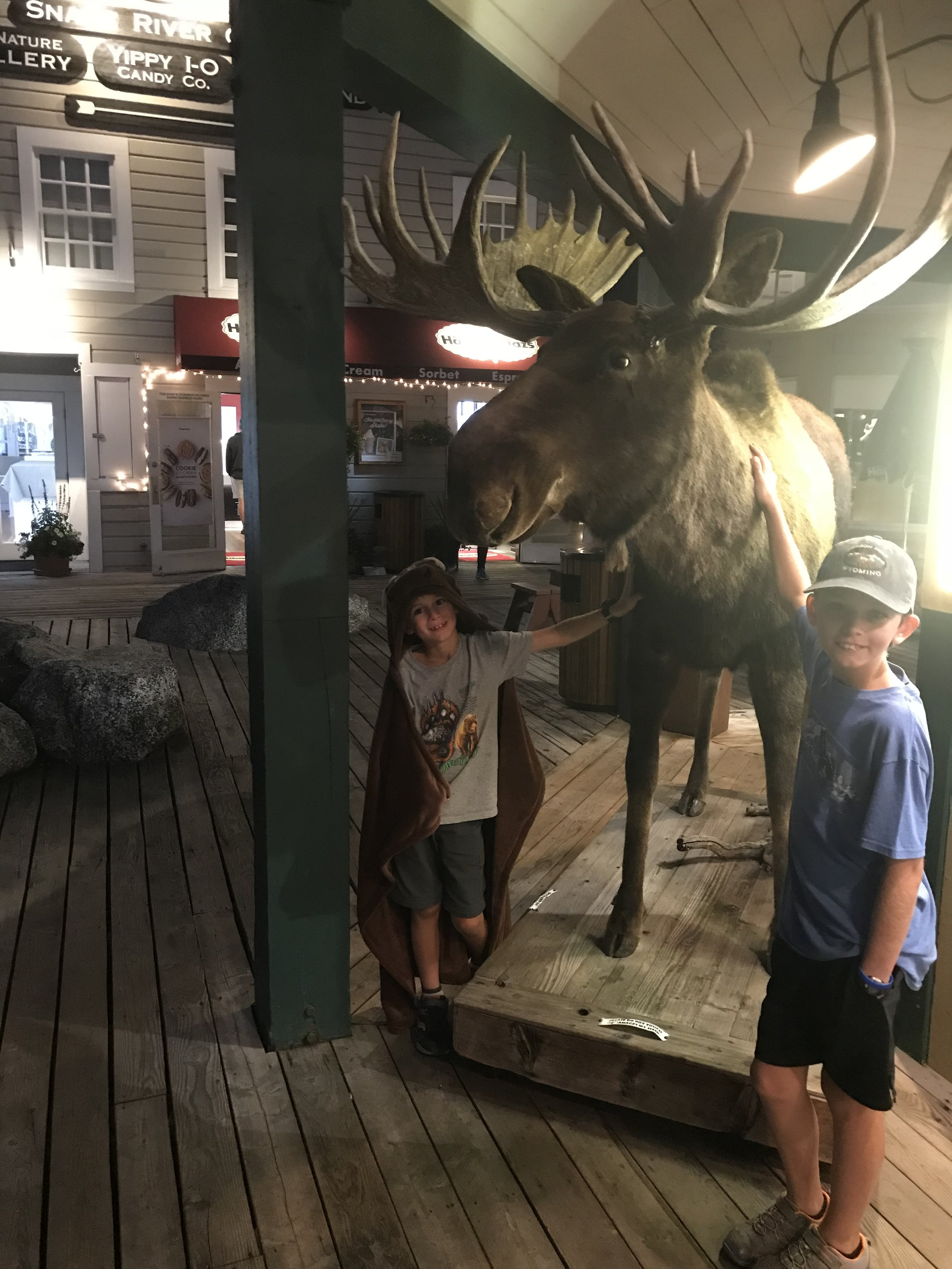 "This is a real, stuffed moose that we passed tonight in downtown Jackson Hole. (Note: Avery is donning his new ""moose"" blanket that he got as a souvenir.)"