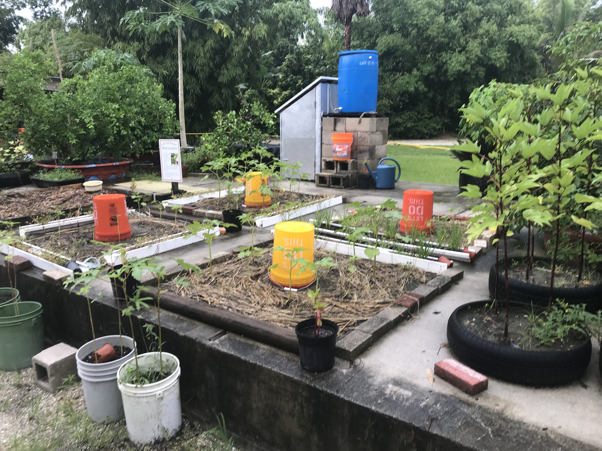 """These """"rooftop"""" garden experiments are utilizing a method of fertilizing and watering that involves continuous wicking from these buckets onto a mat of either old clothing, bed sheets, old carpet, or a polyester fiber."""