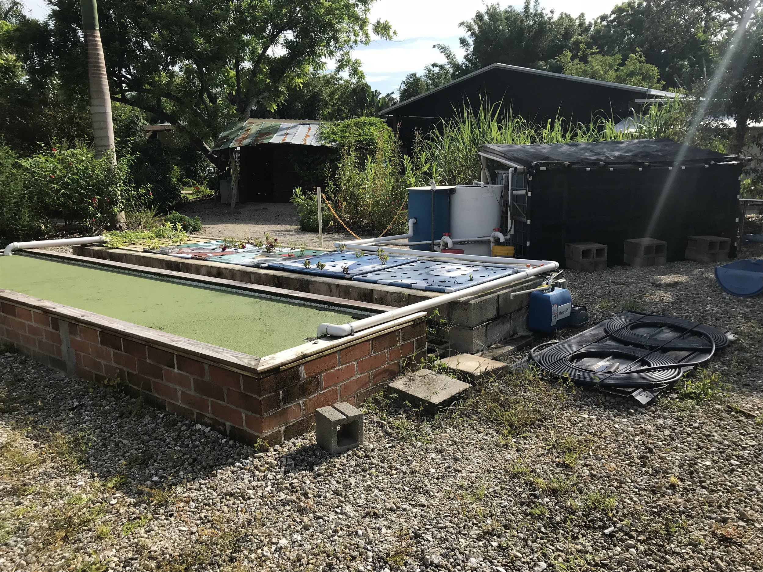 """This is the aquaponics system. In the foreground are rectangular reservoirs which receive nutrient rich water from the fish tanks in the background. (three fish tanks are covered by the black shade cloth) In these reservoirs float foam """"islands"""" which hold vegetables and leaf crops. These plants use the nutrients and then this water is cycled back to the fish tanks to start the cycle over again. The fish tanks were full of nice fat tilapia. I'm getting hungry!"""