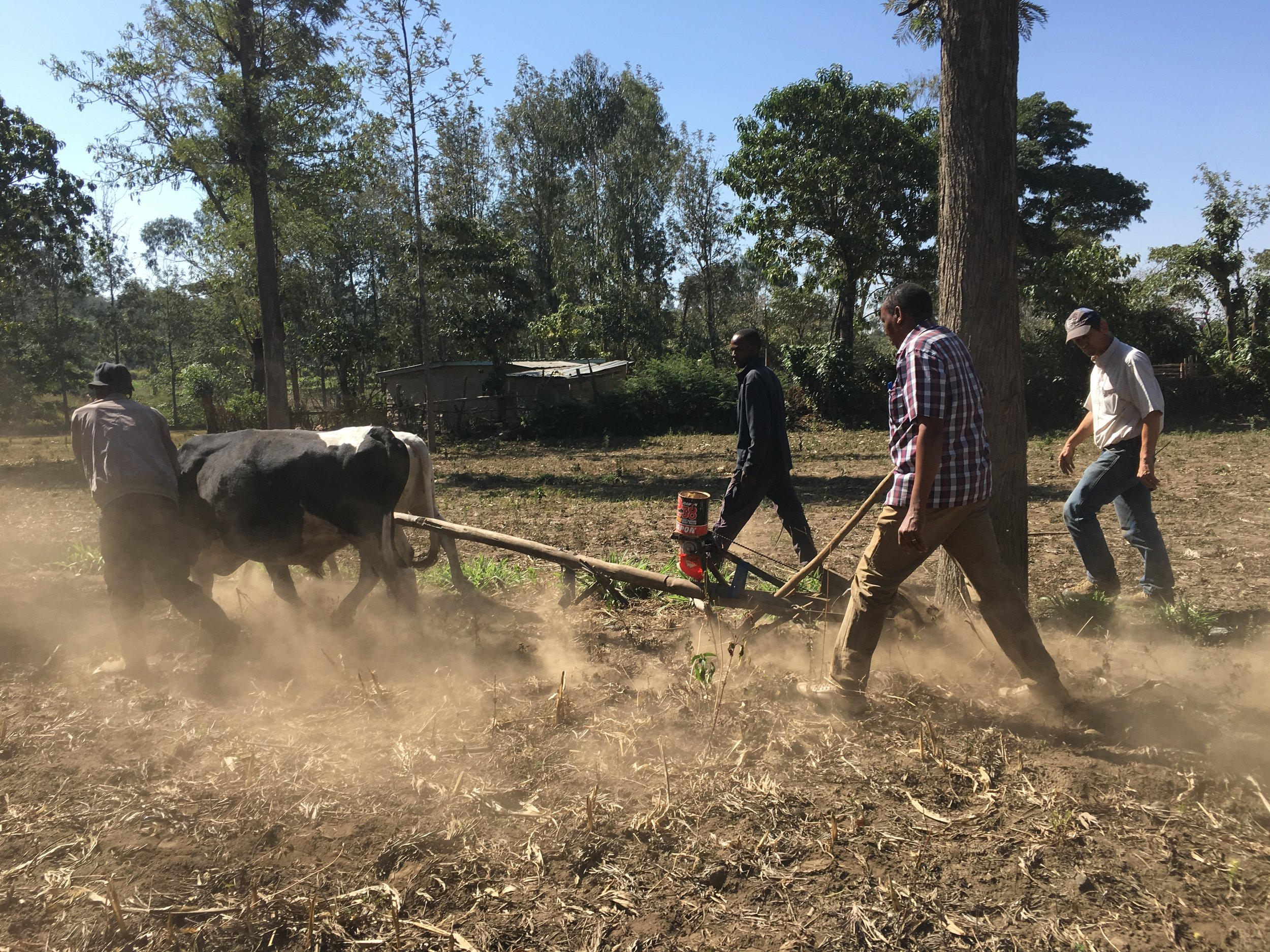 Testing the Maresha Plow - The latest appropriate technology project