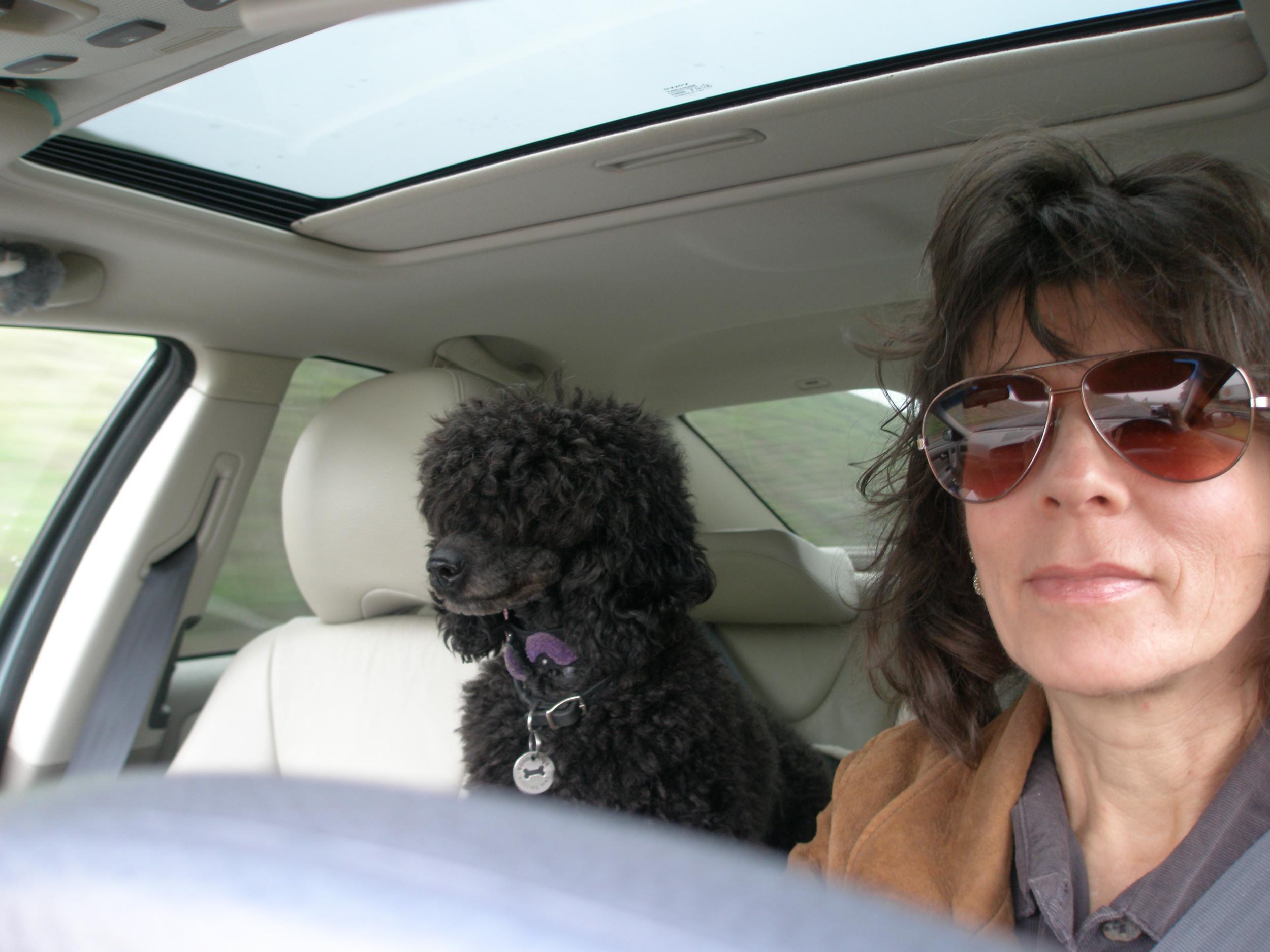 My partner; Yofi the Poodle & I at work.