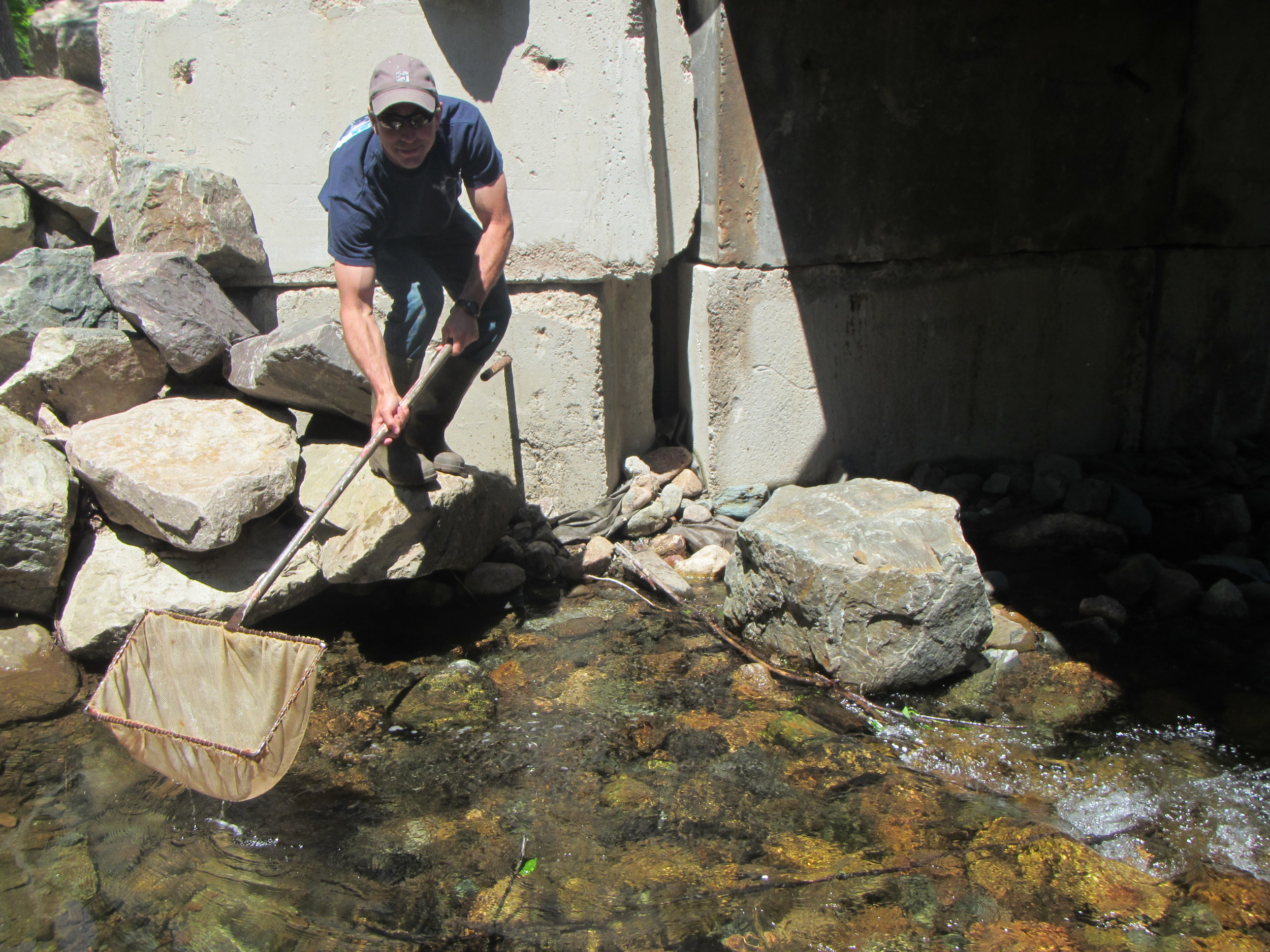 Mark releasing a net full of trout on Aucoin Brook