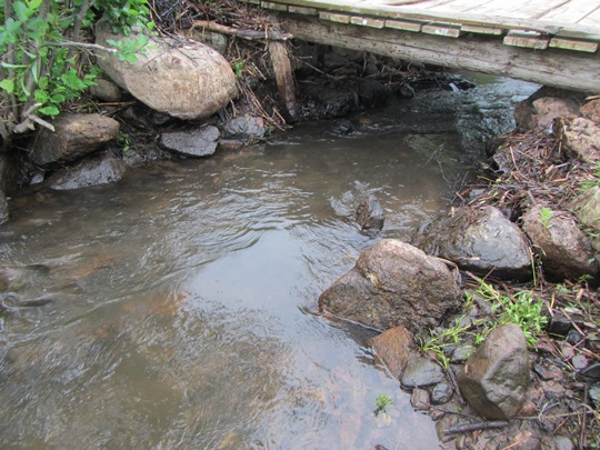 After taking the beaver dam out- it is no longer a barrier, and fish will be able to pass through again!