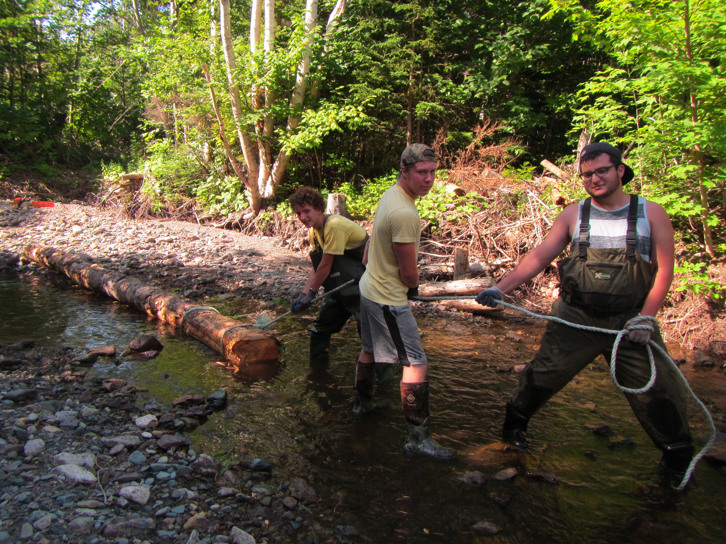 Dragging a part of the soon-to-be log wall into place.