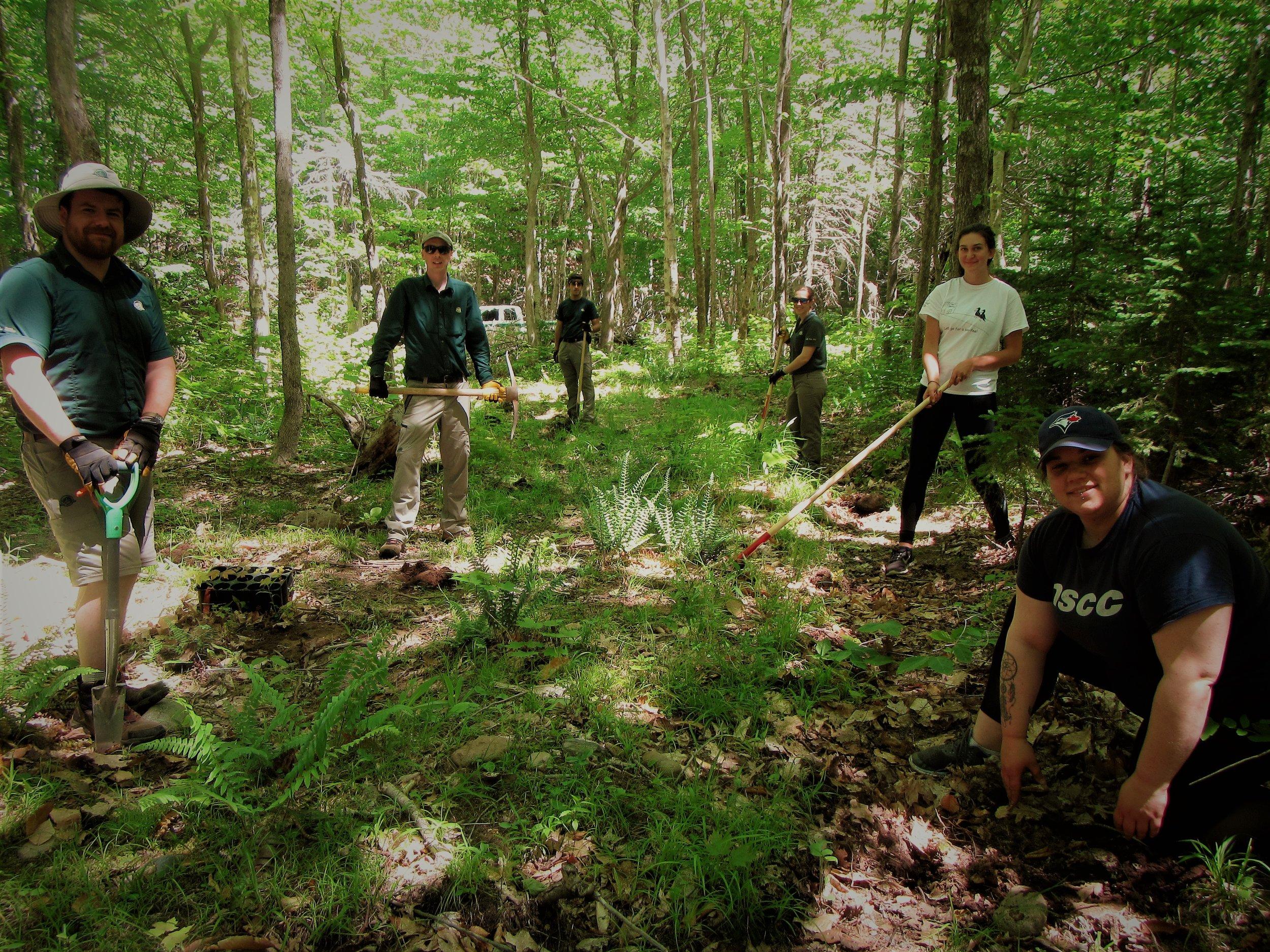 CRSA and Parks Planting Partnership.jpg