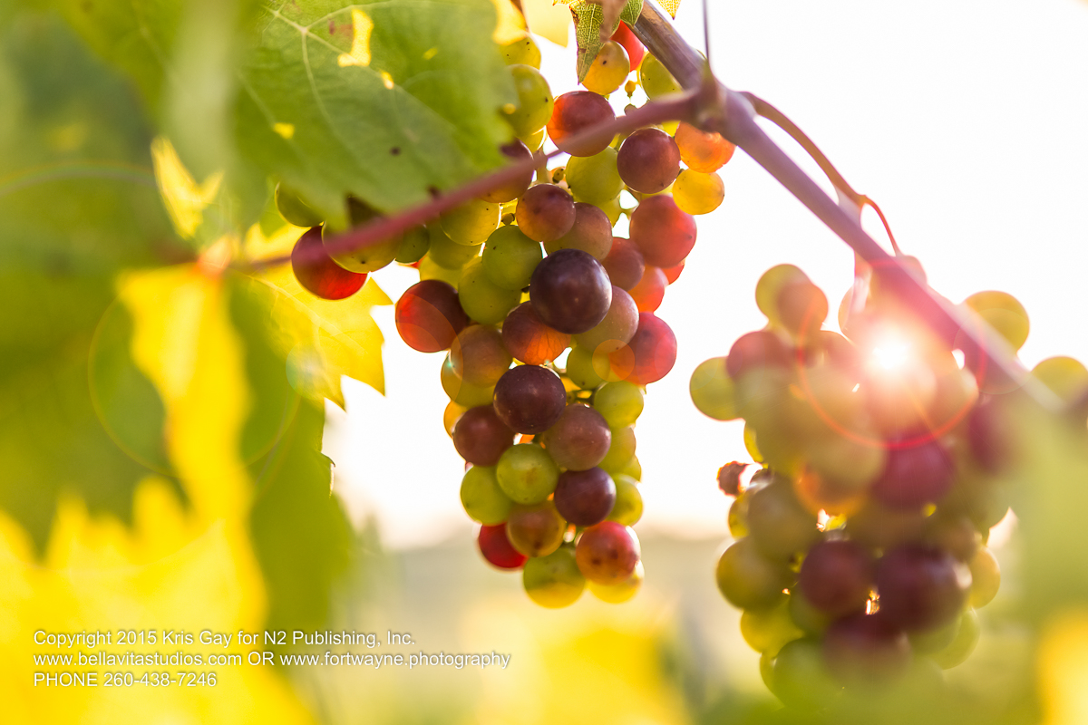 fort-wayne-commercial-photographers-photography-photos-20150723-country-heritage-winery-vineyard-1126