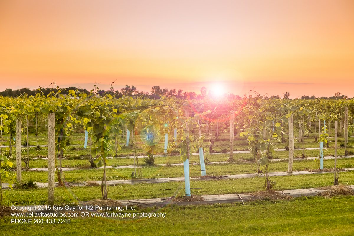 fort-wayne-commercial-photographers-photography-photos-20150723-country-heritage-winery-vineyard-1181