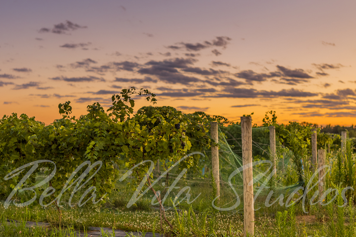 fort-wayne-indiana-commercial-photographers-photography-20150820-country-heritage-winery-pat-dyer-memorial-fund-1084