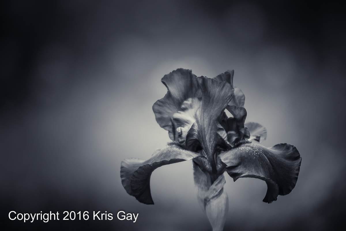 FACEBOOK-SIZE_2016.05.30_MEMORIAL-DAY-1053.jpg