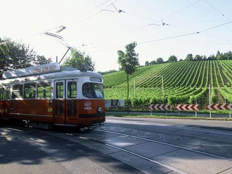 Vienna trolley cruising past the vineyards of the Nussberg in Vienna's 19th District