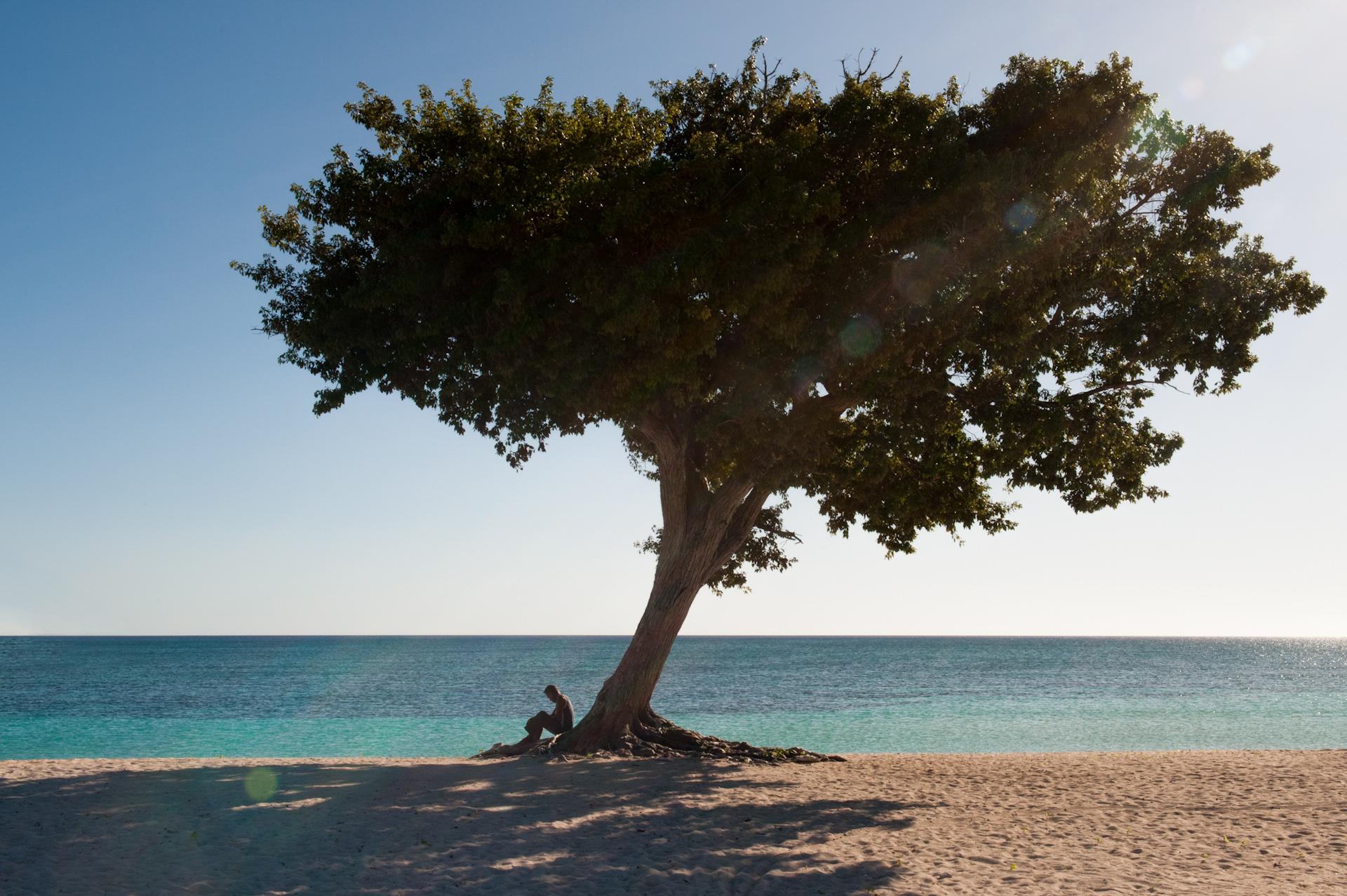 Cuba-Havana-Travel-Trinidad-Beach-Tree.JPG