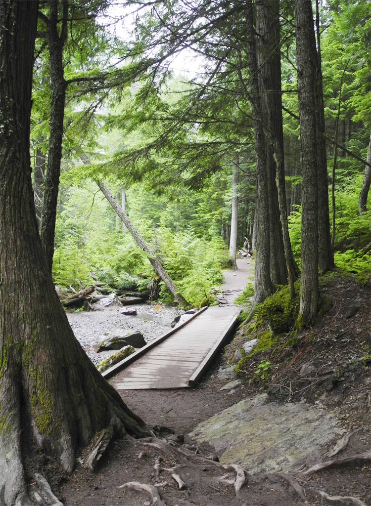 A short boardwalk along the trail to Avalanche Lake.