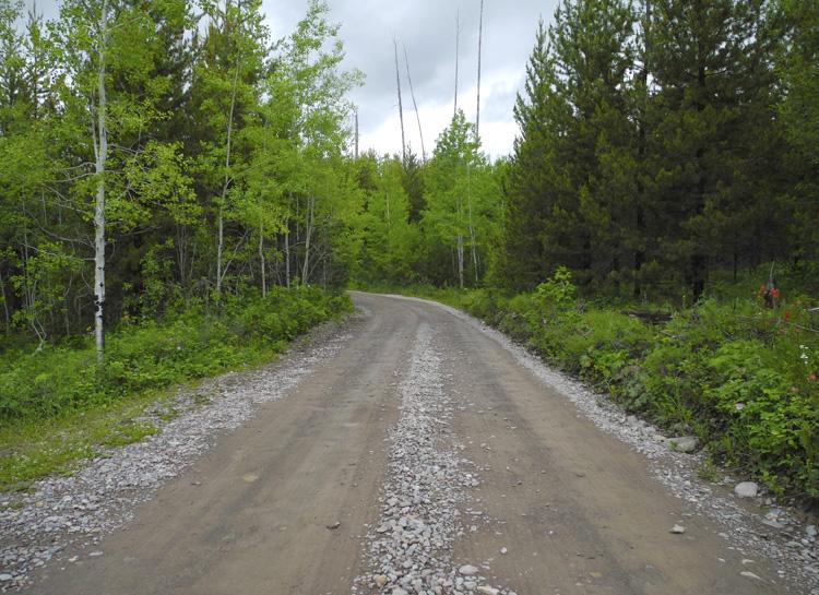 The road toBowman Lake // Glacier National Park // Montana
