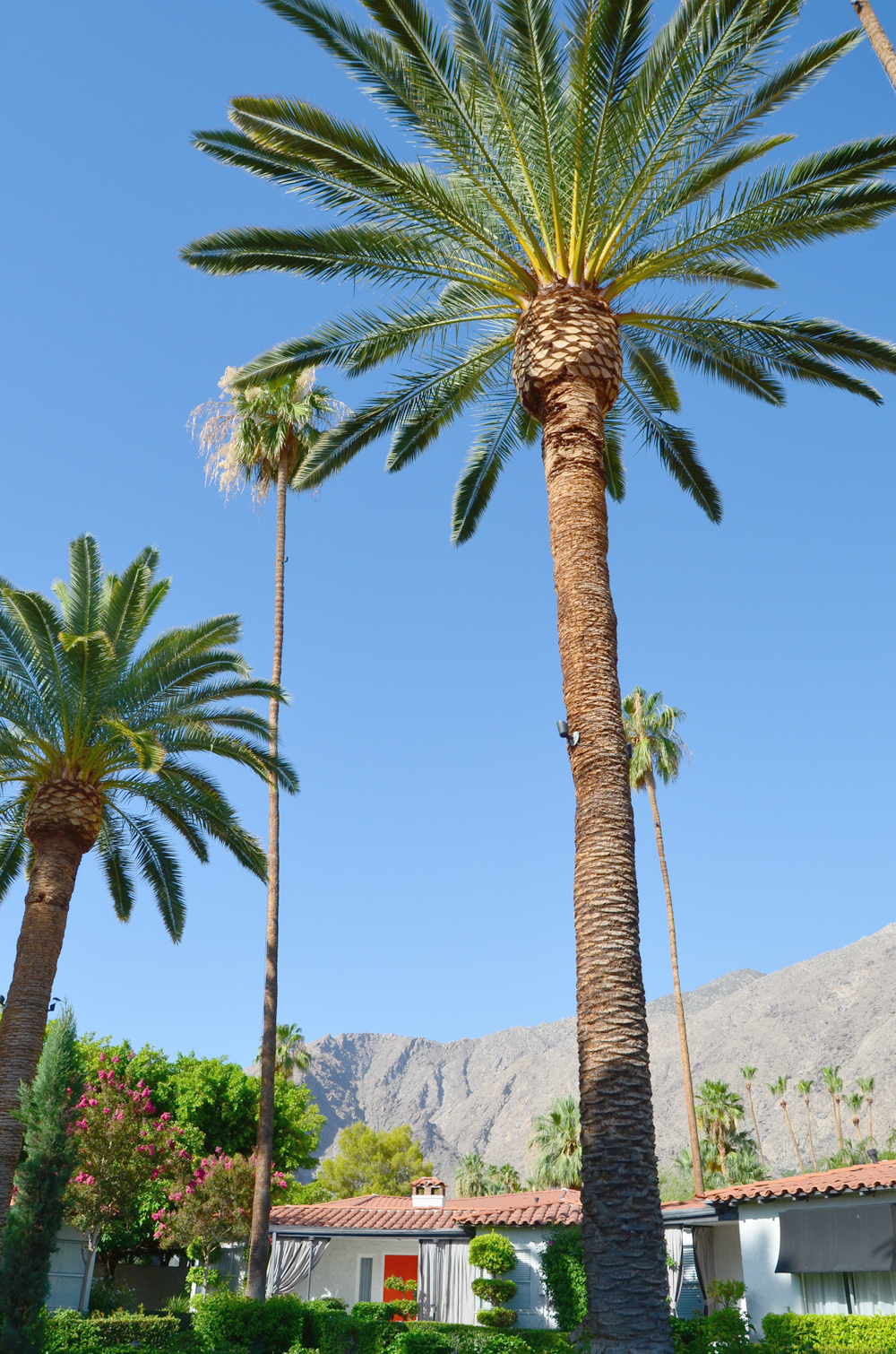 Palm Springs, California // The Viceroy Hotel