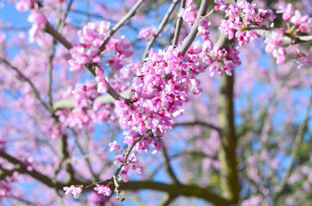 Springtime in Seattle, WA