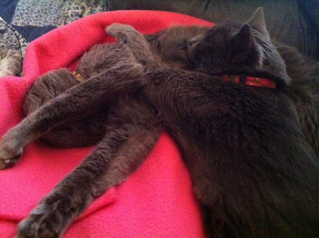 Napping kitties.jpg