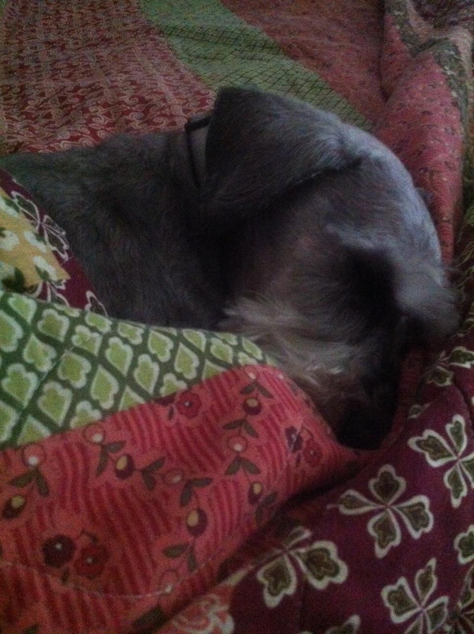 Napping puppy.jpg