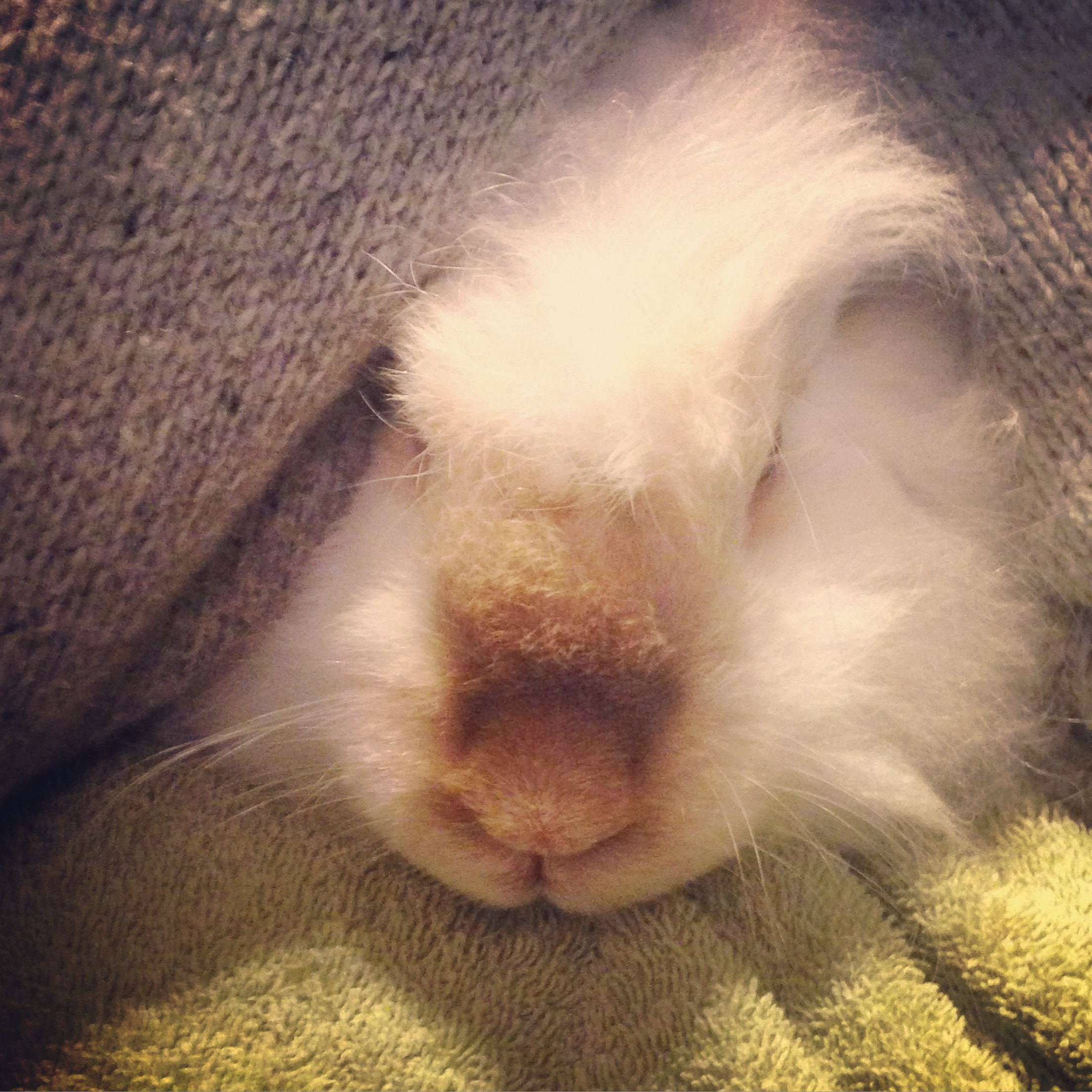 This is Peaches. She is a white mix English and French Angora.