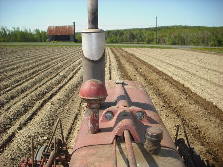 Cultivating potatoes.jpg