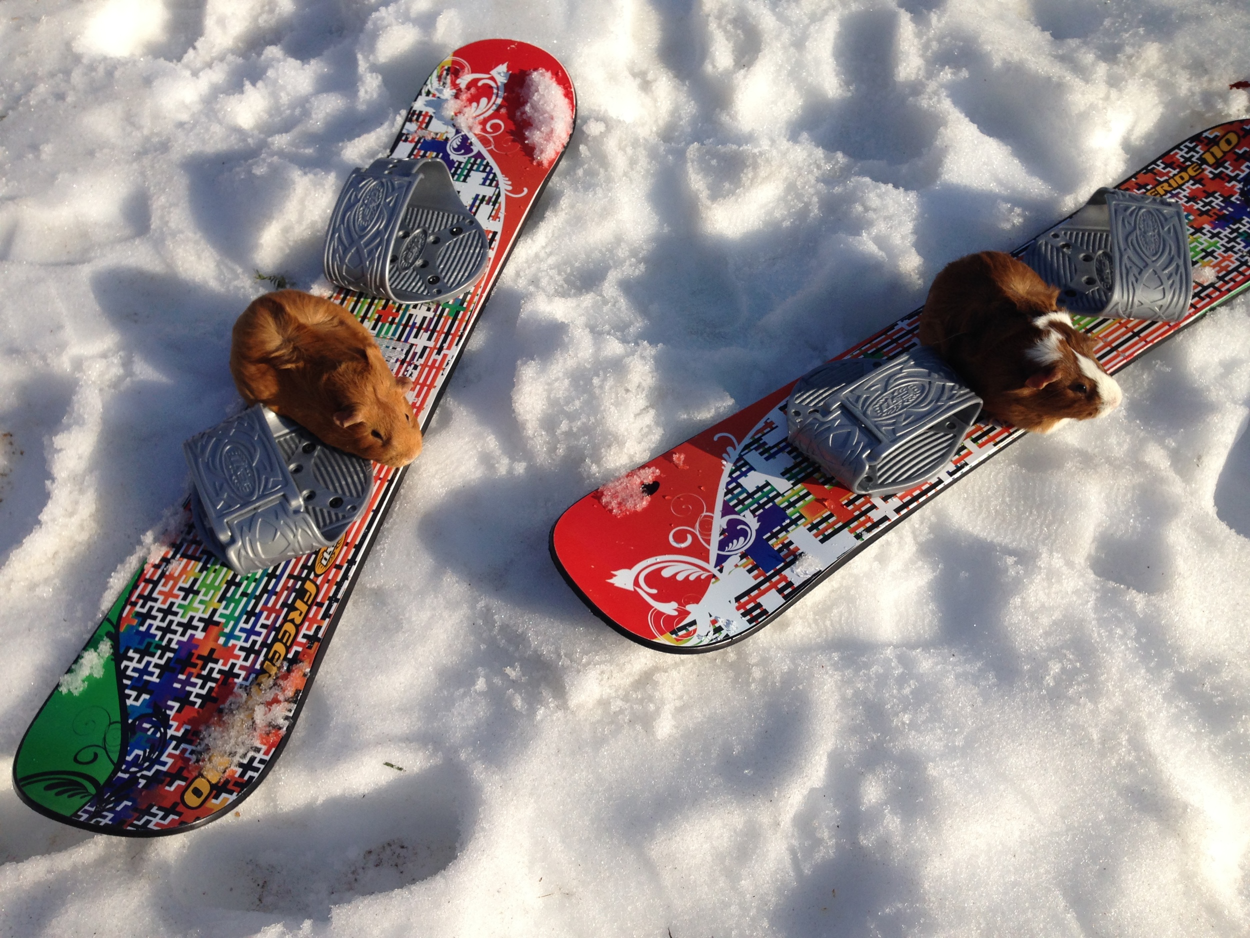Bud-Bud and Boo try out snowboarding.